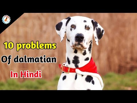 10 Problems OF Dalmatian / in Hindi / Dalmatian problems