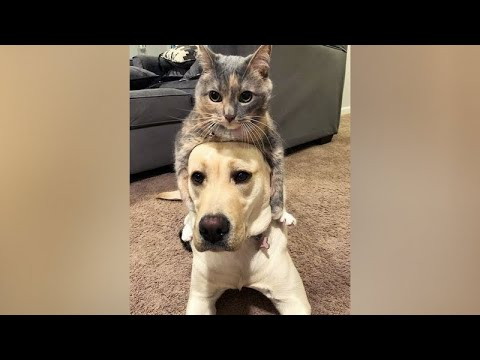 CATS vs DOGS - Who is FUNNIER, who is CUTER?