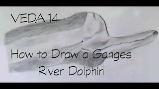 VEDA 14: How to Draw a Ganges River Dolphin