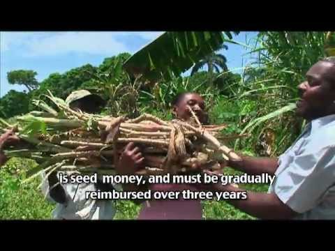 sustainable-agricultural-development-in-haiti---making-a-difference