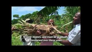 Sustainable Agricultural Development in Haiti - Making a Difference