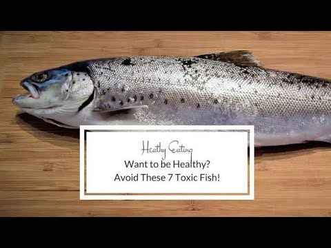 Top 7 Fish Should Avoid  And High In Mercury