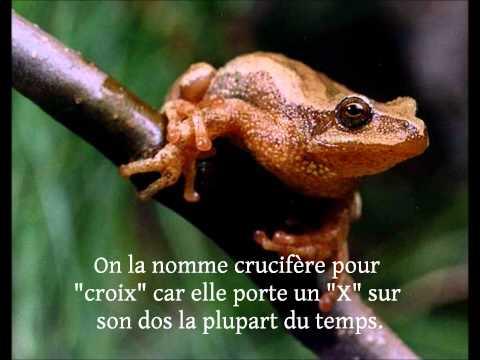 Crapauds, Grenouilles et Rainettes du Québec (Québec Frogs)