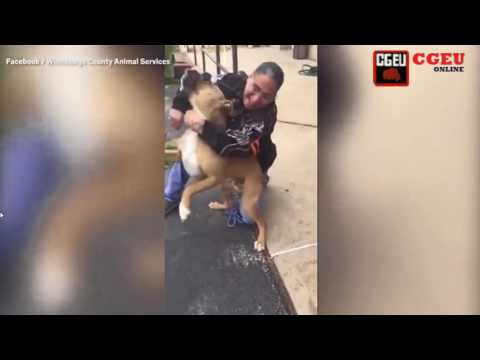 Dog Finally Reunited With Owner After Being Stolen