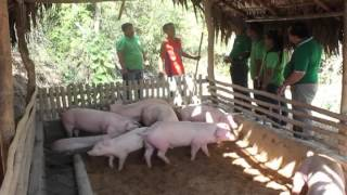Repeat youtube video Babuyang Walang Amoy in Ilocos Sur Ilocos Norte Abra and La Union II