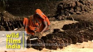 Indian villager making cow dung cakes for cooking fuel, Uttar Pradesh