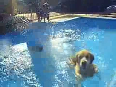 Swimming dogs ate my camera