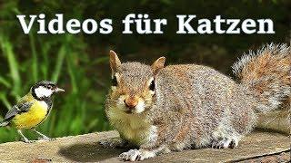 Videos für Katzen : Vögel und Eichhörnchen - 7 STUNDEN