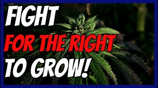 Craft Cannabis vs Marijuana Inc - Who Will Come Out On Top?