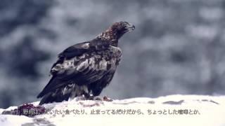今回のエピソードでは、探検家たちが、北極圏の野鳥の撮影に挑戦します...