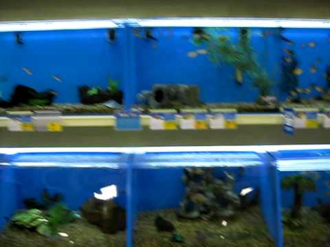 Tropical fish and goldfish at petsmart youtube for Are fish smart