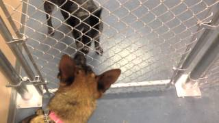 Doggie Daycare Utah- Daycare For Dogs With Aggression Issues