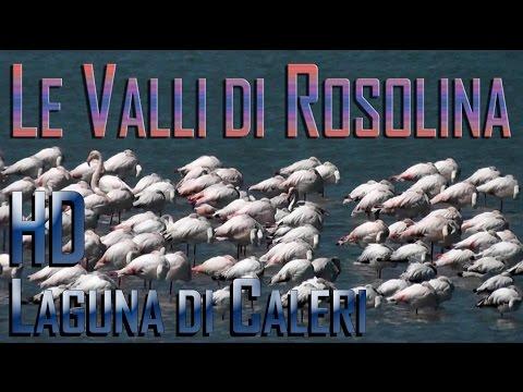 Cicloturismo nell'area del Delta del Po: Rosolina Mare, Loreo, Le Valli Laguna di Caleri, foci Adige