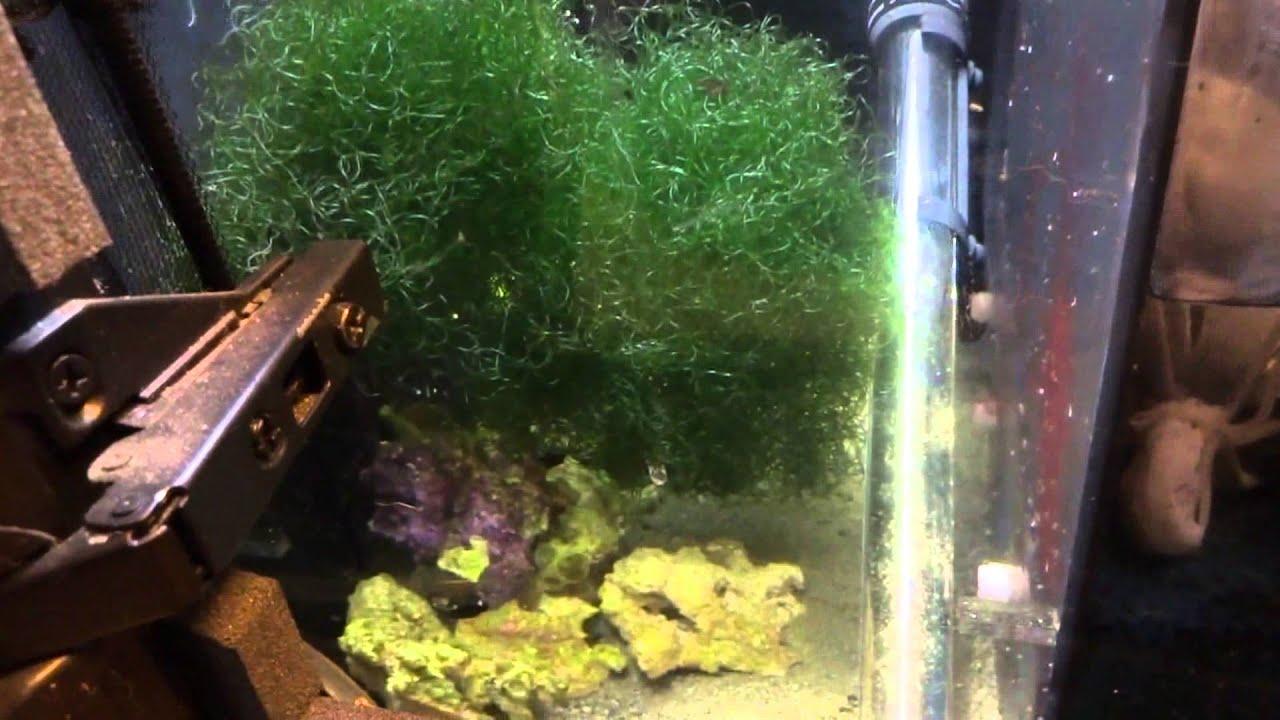 Aquarium Sump Refugium 75 Gallon Reef Tank