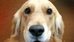Loving Shelter dog needs a forever home