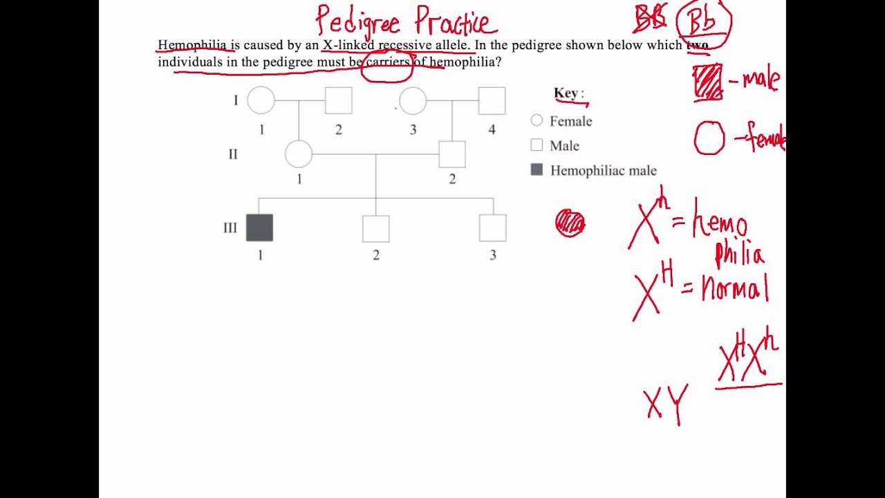 how to solve pedigree diagram questions ib biology  [ 1280 x 720 Pixel ]