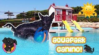 Vamos Al Parque Acuático Para Perros Lana Pierde El Miedo Al Agua Youtube
