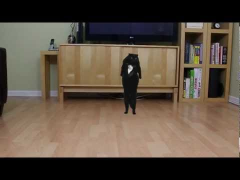 N2 the Talking Cat S3 Ep2 - Oppa Gangnam Style