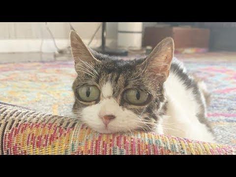 Грустные глаза кошки не за 6 декабря