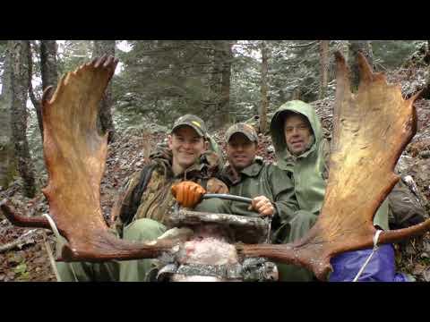 Moose hunt from Newfoundland