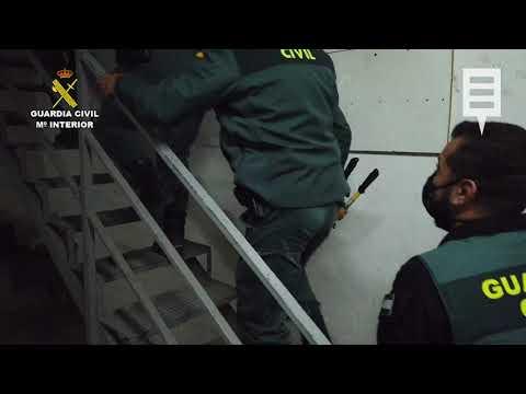 La Guardia Civil desmantela una plantación de marihuana en una nave en Cieza