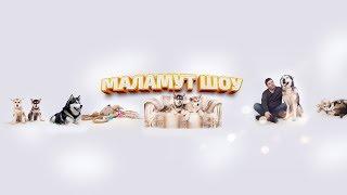 МАЛАМУТ ШОУ | ЩЕНКИ ОНЛАЙН. Puppy online | Malamutes Show online