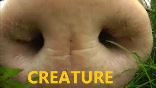 CREATURE Caught on Tape - Alien Lifeform w/ Weight Problems - REAL PROOF 2013