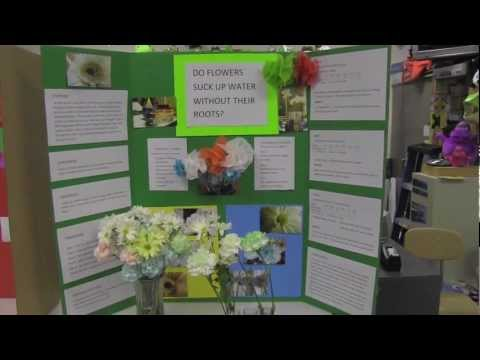 Science Fair Poster Boards - YouTube - project poster board