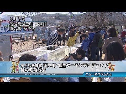 子ども未来館 江戸川・城里サーモンプロジェクト 鮭の稚魚放流