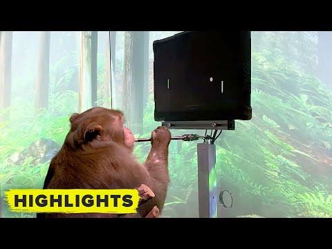 Watch-Elon-Musks-Neuralink-monkey-play-video-games-with-his-brain