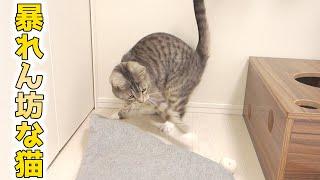 cute cat playing like a kitten