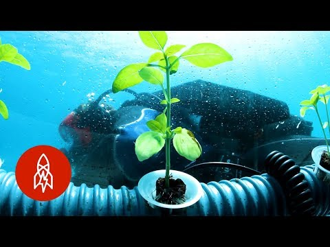 The Herb Garden Grown in an Undersea Pot