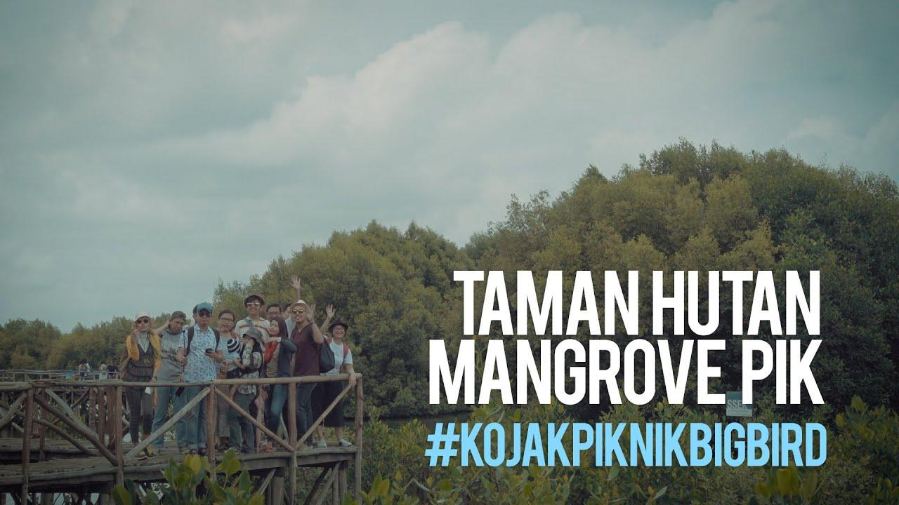 piknik ke taman hutan mangrove pik kojakpiknikbigbird youtube rh youtube com