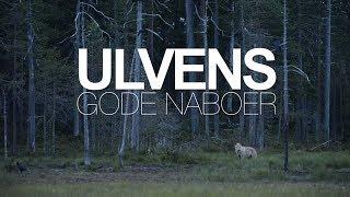 Ulvens Gode Naboer   Dokumentar