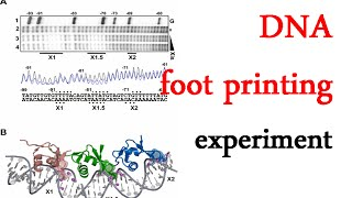 DNA footprinting experiment