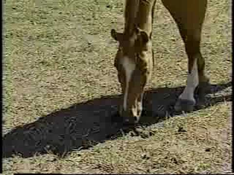 Ground Handling Horses: Introduction and Horse Senses