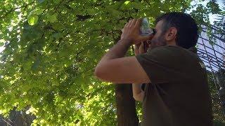 'UN BOSC DE PLOMES'. LA GUIA D'AUS DEL BOTÀNIC (Vídeo en valencià)