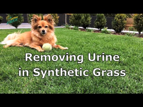 urineFREE: Removing Urine in Synthetic Grass