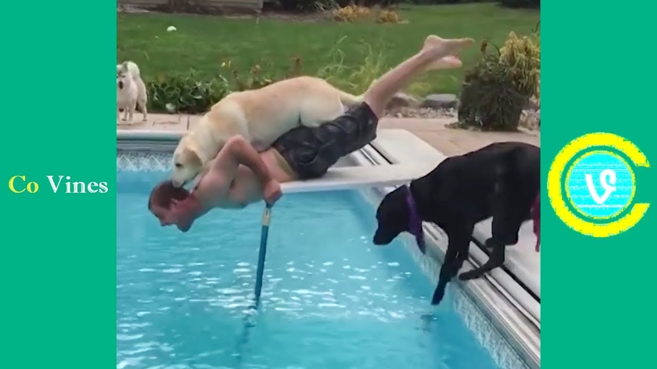 Try Not To Laugh Watching Funny Animal Fails Compilation November 2018 1  Co Vines