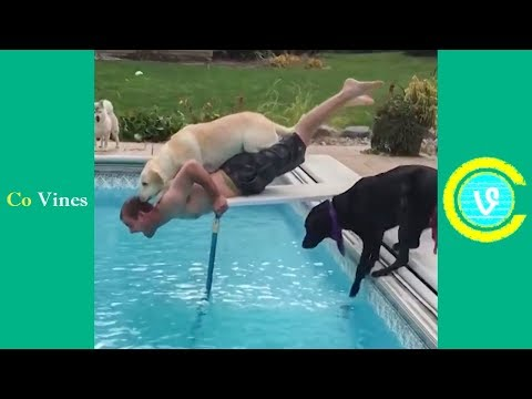 Try Not To Laugh Watching Funny Animal Fails Compilation November 2018 #1 - Co Vines