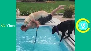 Try Not To Laugh Watching Funny Animal Fails Compilation November 2018 1 - Co Vines