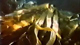 водоросли (урок1). Учебный фильм