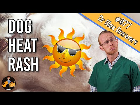 Heat Rash in Dogs: Home Treatment (+ other possible causes) - Dog Care Vet Advice