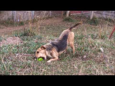 Good Dog Rescue of Nebraska