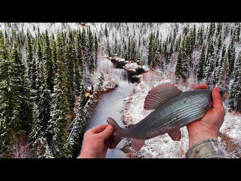 Четыре дня в тайге. Лесная изба. Хариус. Осенняя рыбалка на спиннинг. Таёжный быт. Уха. Часть 1