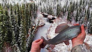 Четыре дня в тайге Лесная изба Хариус Осенняя рыбалка на спиннинг Таёжный быт Уха Часть 1