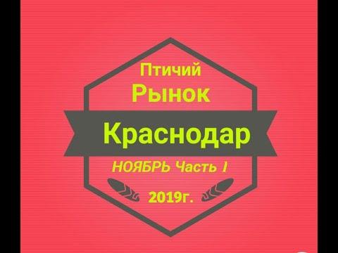 Птичий рынок Краснодар часть 1 (03.11.2019г.) Ярмарка