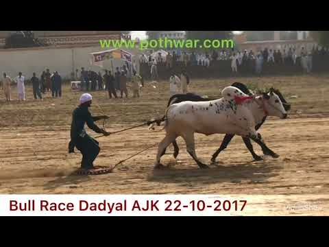 Bull Race Dadyal AJK 22 10 2017