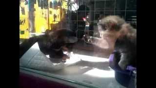 Кот против собаки / маленький котёнок против собаки / детские игры котят