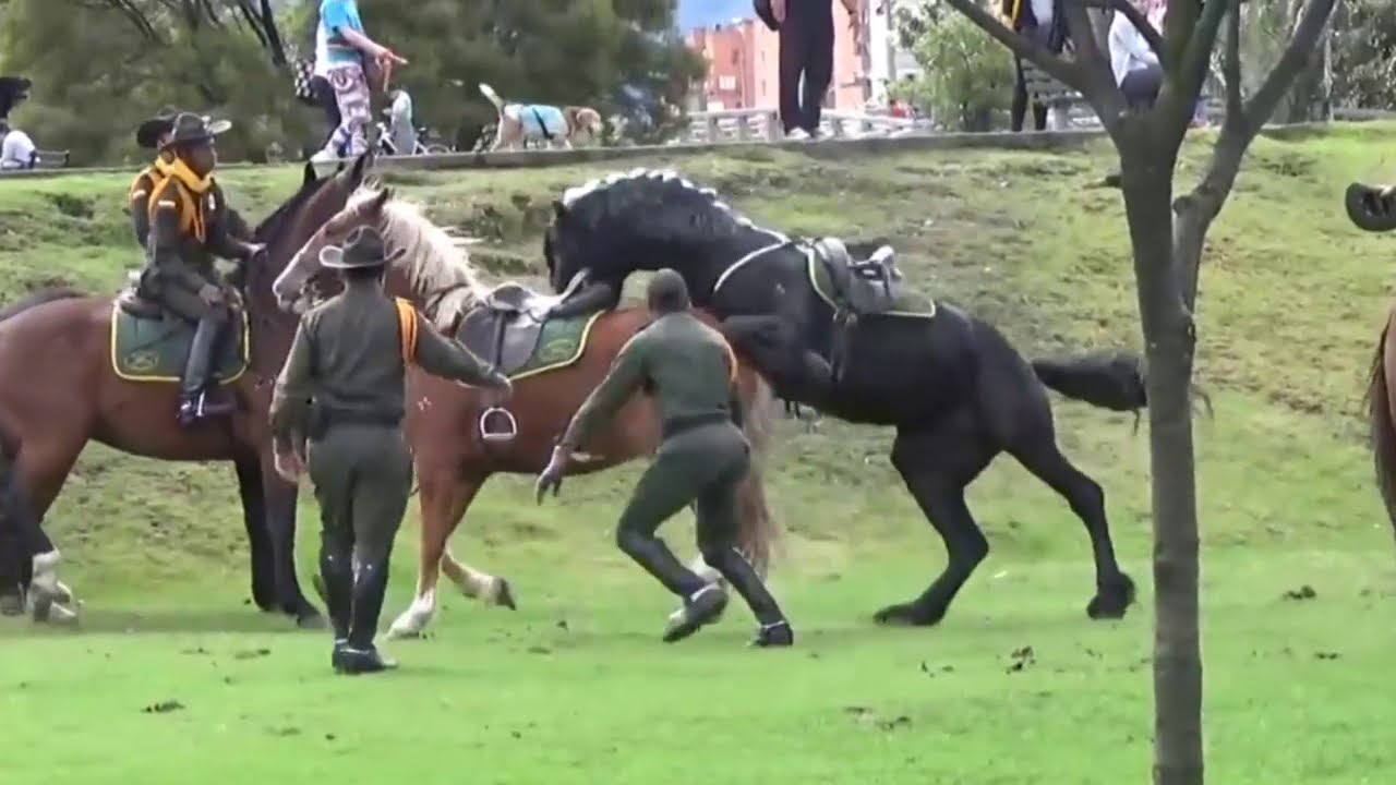 Hermoso caballo pierde el control | Friesian horse loose in park  | Caballo Negro  #animaleshermosos